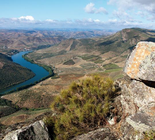 Douro Region_5