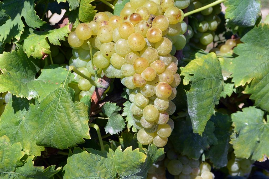Vinho Verde Route