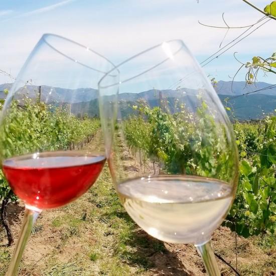 Glasses of rosé and white vinho verde
