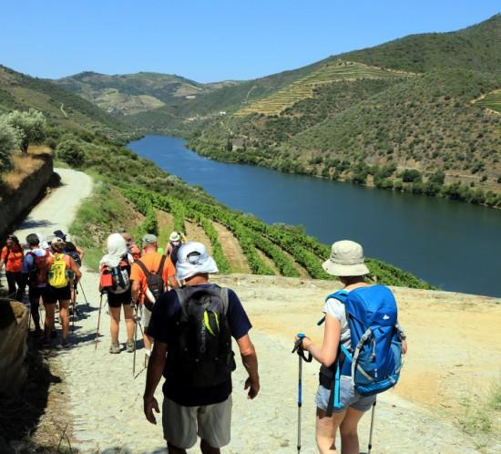 Douro vineyards walking tour