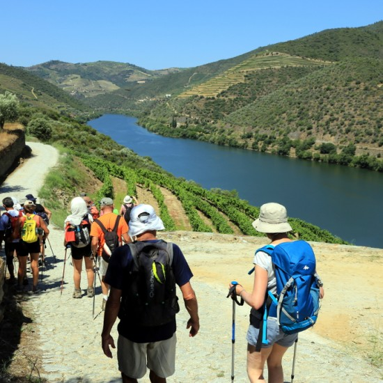 Douro vineyards walking tour