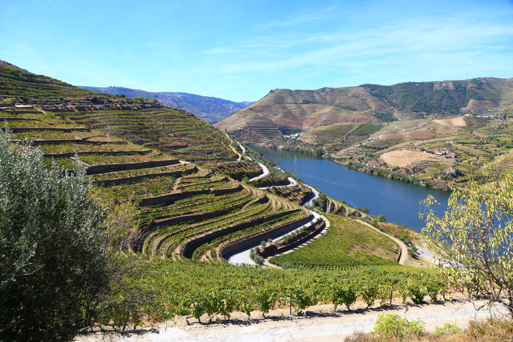 Terraced vineyards Douro wine region