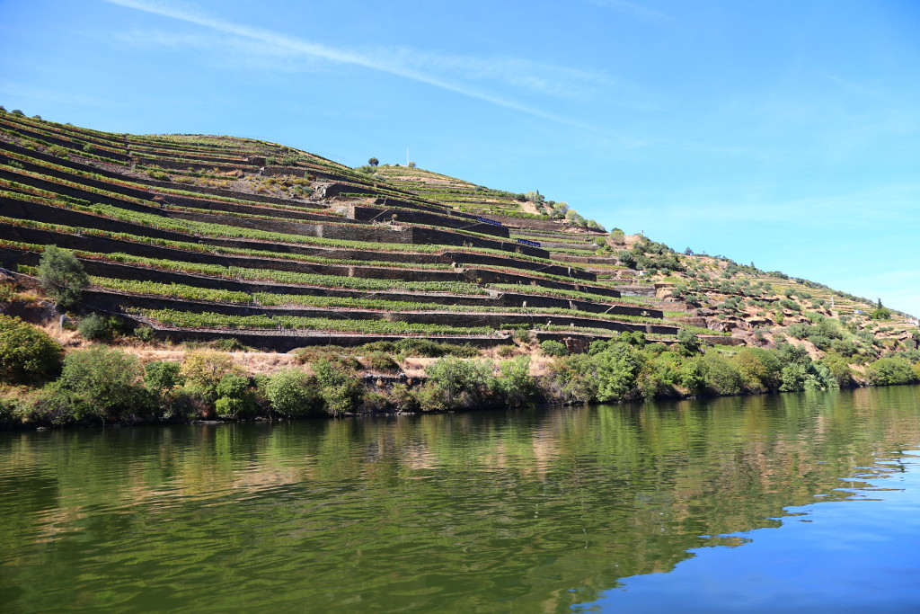 Private Porto Wine Tour