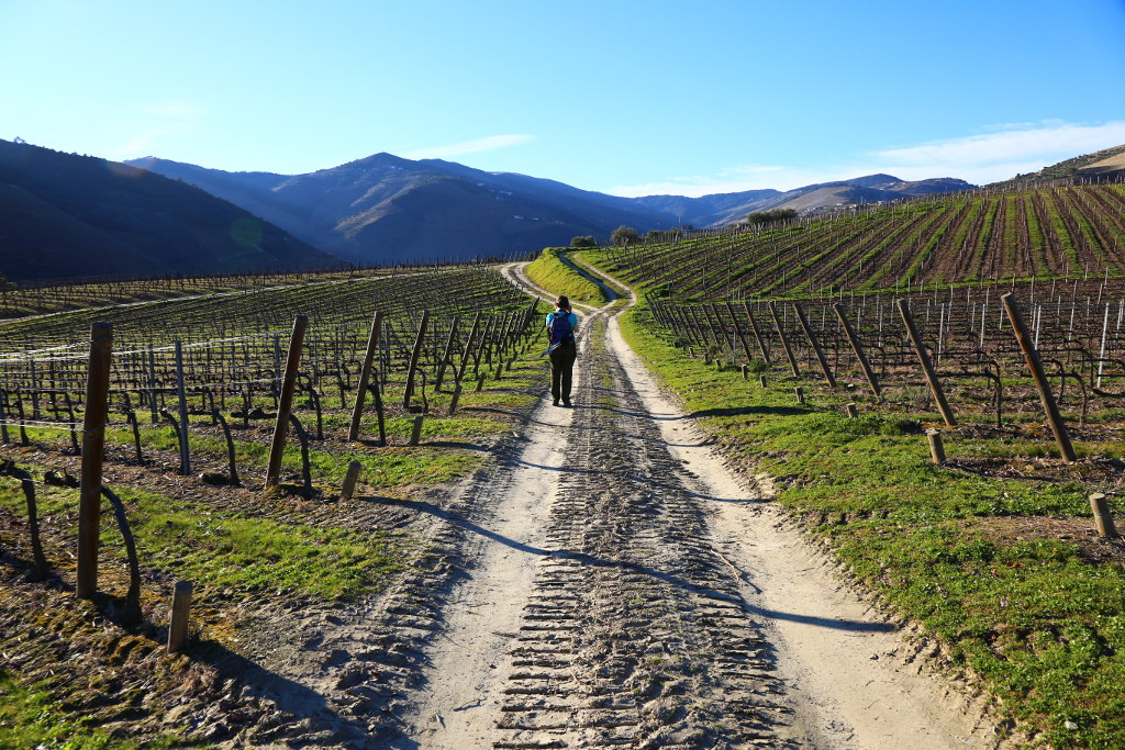 Vineyards and mountains on a self-guided walking holiday in the Douro