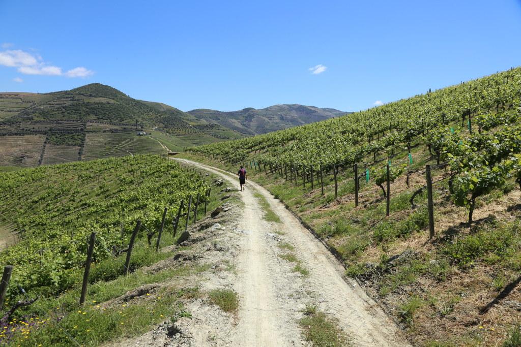 Walking through vineyards in the Douro wine region