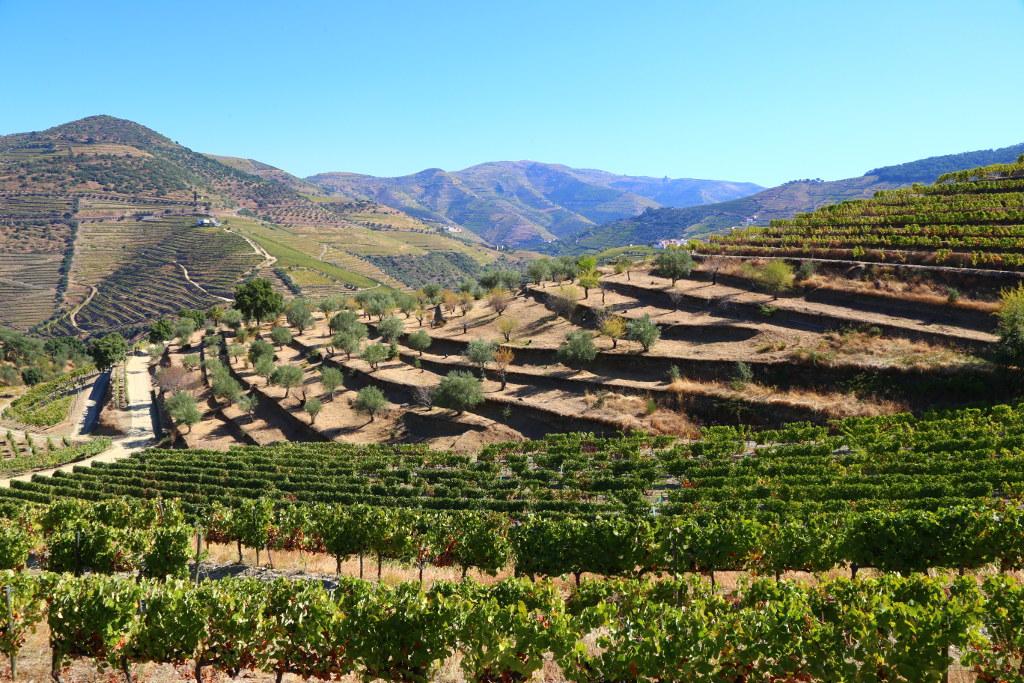 Striped vineyards, Douro Valley