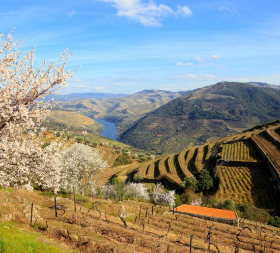 fullday guided douro walking tour