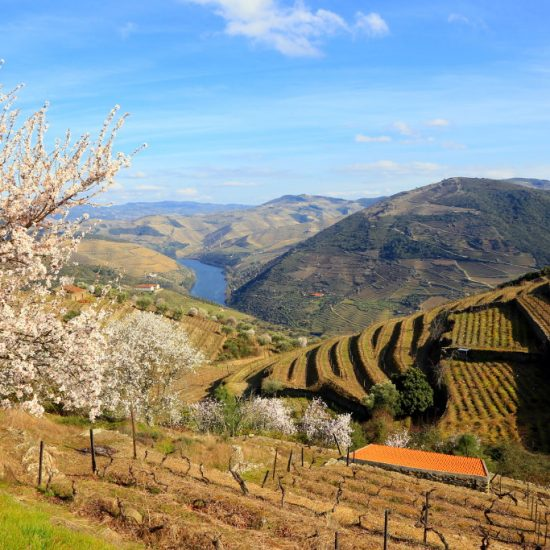 Guided Douro walking adventure