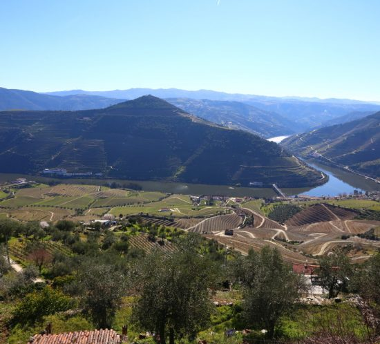 Guided walking tours in Douro wine region