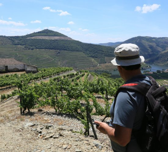 guided day trip to douro valley