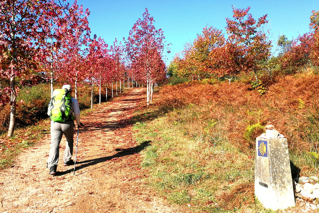 walking the portuguese camino